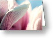 Magnolia Greeting Cards - Magnolia Blossom Greeting Card by Lacaosa