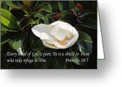 Flower Blossom Greeting Cards - Magnolia Blossom Pro. 30v5 Greeting Card by Linda Phelps