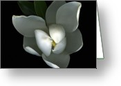 Magnolia Mixed Media Greeting Cards - Magnolia Greeting Card by Christian Slanec