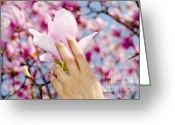 Holding Flower Greeting Cards - Magnolia flower Greeting Card by Mats Silvan