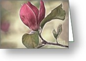 Magnolia Greeting Cards - Magnolia Glow Greeting Card by Susan Candelario