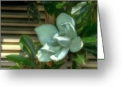 Magnolia Grandiflora Greeting Cards - Magnolia Grandiflora Greeting Card by Mark Richards