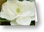 White Flower Greeting Cards - Magnolia Grandiflora Greeting Card by Suzanne Gaff