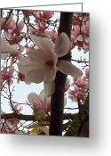 Bold Blossom Greeting Cards - Magnolia Hang On Branch Greeting Card by Debra     Vatalaro