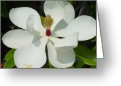 Magnolia Grandiflora Greeting Cards - Magnolia II Greeting Card by Suzanne Gaff