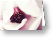 Magnolia Greeting Cards - Magnolia Greeting Card by Lacaosa