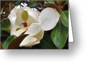 Wall Art Greeting Cards - Magnolia Treasures Greeting Card by Joyce Dickens