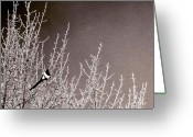Feeding Greeting Cards - Magpie Greeting Card by Will Borden