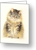 Maine Painting Greeting Cards - Maine Coon Cat Greeting Card by Bonnie Rinier
