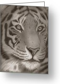 Dawn Jones Greeting Cards - Majestic Gaze Greeting Card by Dawn Jones