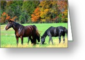 Quarter Horses Greeting Cards - Majestic Horses Greeting Card by Peggy  Franz