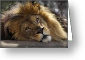 Lion Greeting Cards - Majestic Love Greeting Card by Linda Mishler