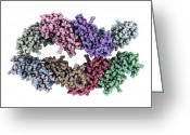 Most Photo Greeting Cards - Major Sperm Protein Molecule Greeting Card by Laguna Design