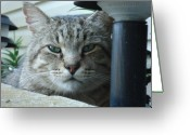 Kitty Greeting Cards - Make My Day Greeting Card by Dean Caminiti