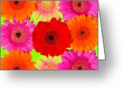 Pink Flower Prints Digital Art Greeting Cards - Make my Day II Greeting Card by Artecco Fine Art Photography - Photograph by Nadja Drieling