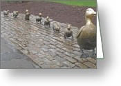 Boston Greeting Cards - Make way for ducklings Greeting Card by Barbara McDevitt