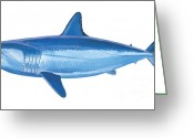 Mako Shark Greeting Cards - Mako Shark Greeting Card by Carey Chen