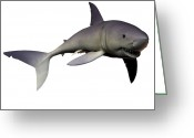 Mako Shark Greeting Cards - Mako Shark Greeting Card by Corey Ford