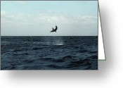 Mako Shark Greeting Cards - Mako Shark On A Fishing Line Greeting Card by Georgette Douwma