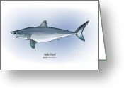 Mako Shark Greeting Cards - Mako Shark Greeting Card by Ralph Martens