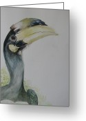 Hornbill Painting Greeting Cards - Malabar Pied Hornbill -Juvenile bird Greeting Card by Sasitha Weerasinghe