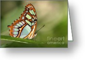 Gossamer Greeting Cards - Malachite Butterfly Greeting Card by Sabrina L Ryan