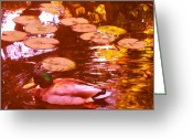 California Landscapes Greeting Cards - Malard Duck on Pond 3 Square Greeting Card by Amy Vangsgard