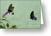 Partner Greeting Cards - Male and female Great Mormon butterflies hovering over a wildflower Greeting Card by Sami Sarkis