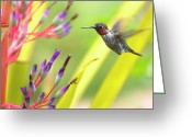 Bromeliad Greeting Cards - Male Annas Hummingbird Greeting Card by Mike Herdering