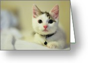 Camera Greeting Cards - Male Kitten Sitting On Bed Greeting Card by Nazra Zahri