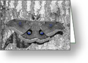 Antheraea Polyphemus Greeting Cards - Male Moth - Blue Eyes Greeting Card by Al Powell Photography USA