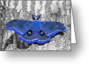 Antheraea Polyphemus Greeting Cards - Male Moth - Brilliant Blue Greeting Card by Al Powell Photography USA