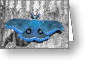 Antheraea Polyphemus Greeting Cards - Male Moth Light Blue Greeting Card by Al Powell Photography USA