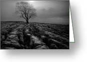 Contre Jour Greeting Cards - Malham Tree 01 Greeting Card by Simon Lupton