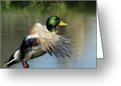 Mallards Greeting Cards - Mallard Digital Freehand Painting 2 Greeting Card by Ernie Echols