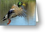 Mallards Greeting Cards - Mallard Digital Freehand Painting 3 Greeting Card by Ernie Echols