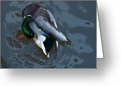 Collage On Wood Greeting Cards - Mallard  Greeting Card by Don  Wright