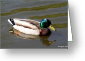 Smudgeart Greeting Cards - Mallard Duck Greeting Card by Madeline M Allen