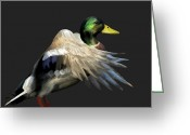 Mallards Greeting Cards - Mallard Freehand 1 Greeting Card by Ernie Echols