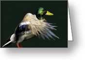 Mallards Greeting Cards - Mallard Freehand Greeting Card by Ernie Echols