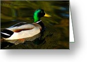 Bruster Greeting Cards - Mallard Green Greeting Card by Clayton Bruster