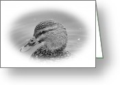 Hen Greeting Cards - Mallard Hen Greeting Card by Todd Hostetter
