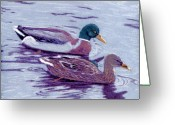 Lakes Pastels Greeting Cards - Mallard Pair Greeting Card by Jan Amiss