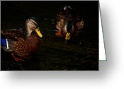 Mallards Greeting Cards - Mallard Pair Greeting Card by Karol  Livote