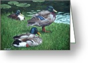M P Davey Greeting Cards - Mallards On River Bank Greeting Card by Martin Davey