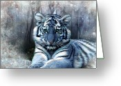 Tiger Cub Greeting Cards - Maltese Tiger Greeting Card by Julie L Hoddinott
