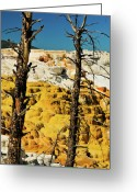 Yellowstone Landscape Art Greeting Cards - Mammoth Upper Terrace Greeting Card by Greg Norrell