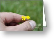 Holding Flower Greeting Cards - Man hand holding a yellow flower Greeting Card by Mats Silvan