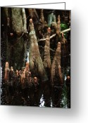 Cypress Knees Greeting Cards - Man of the Swamp Greeting Card by Joseph G Holland
