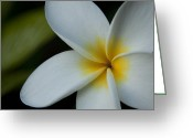 Fragrant Flowers Greeting Cards - Mana i ka Lani - Tropical Plumeria Hawaii Greeting Card by Sharon Mau